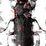 Urheberrecht VW Beetle –  Kein Urheberrechtsschutz für Modell des Ur-Käfers von VW